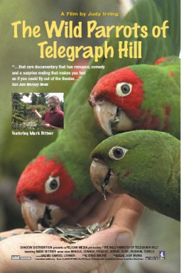 Poster for The Wild Parrots of Telegraph Hill